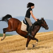 Ruade cheval