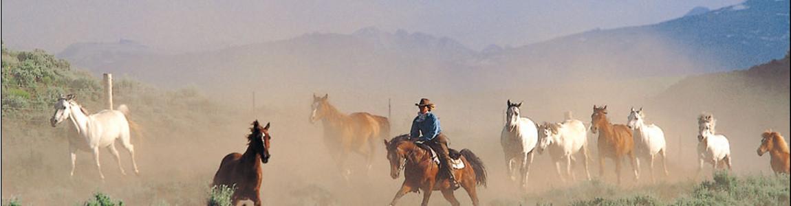 Les Buts de L'Equitation Ethologique